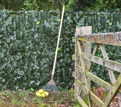 top screening ideas for your garden u2013 pyracantha co uk