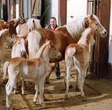 Pferdezentrum Bad Saarow Gefriersperma Handel Landgestüt Konkurriert Mit Online Anbietern
