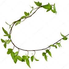 border frame made of green climbing plant u2014 stock photo madllen