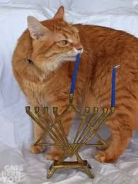cat menorah memorials cat memorial park and cat