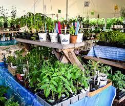 2017 plant sale highlights u2013 friends of ccmnh