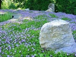 Backyard Ground Cover Ideas Ground Cover Backyard Ground Cover Ideas Landscape By Backyard