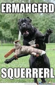 Ermahgerd Animal Memes - meme center largest creative humor community funny memes meme