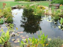 fish pond projects ideas columbia sc augusta ga mccormick