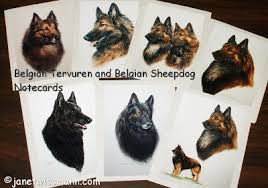 belgian sheepdog colors german shepherd belgian tervuren u0026 sheepdog old english sheepdog