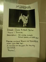 lost dog poster www singaporelostandfound blogspot com lost