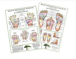 Foot Reflexology Map 8 5 X 11 Laminated Charts Branch Reflexology Institute