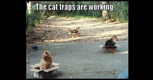 Cardboard Box Meme - the cat traps are working wititudes