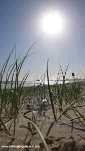 19 best palm beach currumbin my home images on pinterest palm