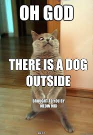 Dog Cat Meme - oh god there is a dog outside cat meme cat planet cat planet