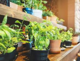 What Is An Urban Garden 5 Plants That Make An Indoor Vegetable Garden House Method