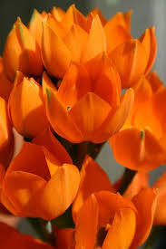 Yellow Orange Flowers - 17 best images about outrageous orange on pinterest orange