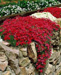 10 easy care plants for perfect plants for rock wall landscapes sunshine butterfly and