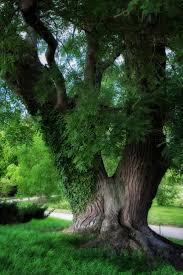 Forest Mural by 129 Best Forest Mural Tree Addons Images On Pinterest Nature