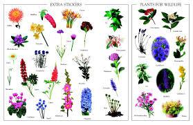 rhs garden flowers ultimate sticker book family hobby bookshop