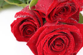 Nice Flowers Flower Red Roses Flowers Photography Wet Harmony Nice Flower