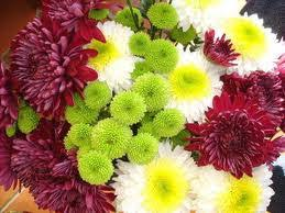 flowers for flower lovers fuji mums flowers pictures growing