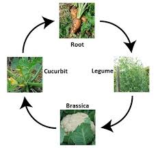 the vegetable garden u2013 groups and rotating