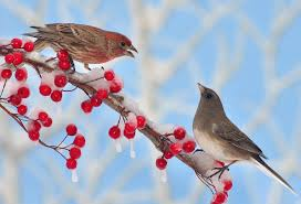 Minnesota birds images Winter birds in minnesota wagners greenhouses jpg