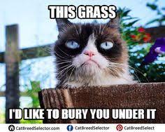 Hairless Cat Meme - hairless cat memes images funny cute angry grumpy cats memes
