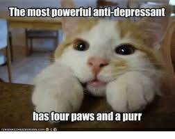 the most powerful antidepressant has four paws and a purr