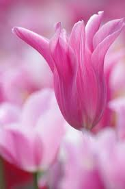 113 best blooming images on pinterest spring flowers spring and