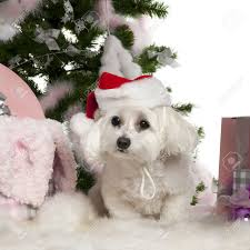 awesome maltese ornaments part 6 santa puppy in gift
