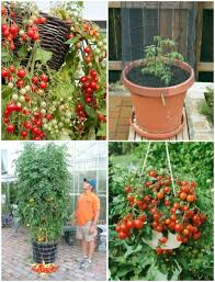super ideas gardening in containers wonderful decoration container