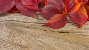 wooden leaves wall autumn background leaves on brown wooden wall stock footage
