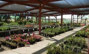 Nursery Plant Supplies by Nursery Yuma Az Yuma Nursery Supply