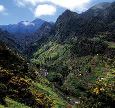 Madeira Flowers - holidays in madeira u2013 never to miss u2013 hotels direct buy