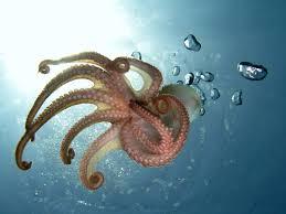 6 reasons to love cephalopods britannica com