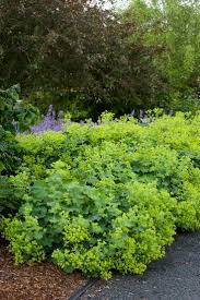 perennial garden vegetables 23 best garden perennials images on pinterest garden plants