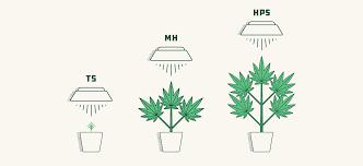what is the best lighting for growing indoor how to select the best lights for growing 2020