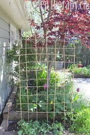 How To Make Trellis For Peas How To Make A Diy Bamboo Trellis