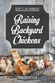 raising backyard chickens homestead handbook