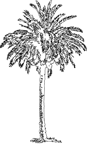 date palm black white line art coloring book colouring sheet