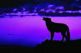 imagenes de fondo de pantalla lobos fondo escritorio paisaje lobo aullando