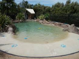 Diy Backyard Pool best 20 dog swimming pools ideas on pinterest diy dog yard