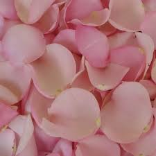 fresh petals light pink fresh petals wedding 500 irosepetals