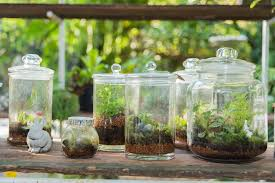 make a terrarium with these 5 tips home wcfcourier com