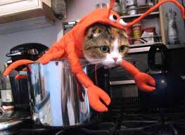Hilarious Costumes 15 Hilarious Cats In Costumes Kitty Bloger