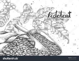 coffee product label coffee bean sackcloth stock vector 723640390
