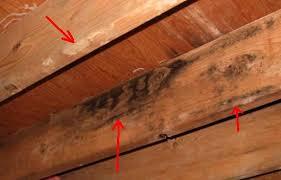 mold on island island home inspection