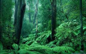 Deep Forest Green Deep Full Hd Wallpapers Search