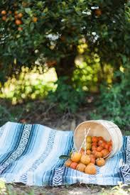 orange grove engagement session in winter garden florida