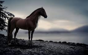 ferrari horse wallpaper horse wallpaper qygjxz