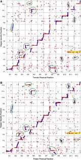 Genome Mapping Ultra High Density Transcript Based Genetic Maps Of Pepper Define