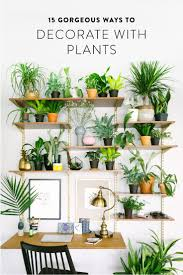 118 best plants images on pinterest plants gardening and indoor
