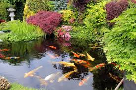 landscaping withi water features